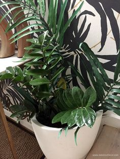 Are You Tired of Killing Your Houseplants? Easy Care Indoor Plants, Outdoor Plants, Plants Indoor, All Plants, Growing Plants, House Plant Care, Garden Spaces, Container Plants, Plant Decor