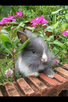 Awe cute bunny