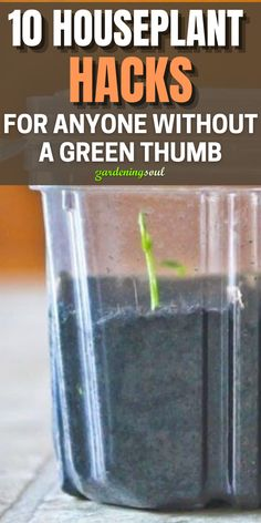 Check out! #gardeninghacks Gardening Hacks, Container Gardening, Raising Farm Animals, Garden Windows, Best Fragrances, Healthy Environment, Step By Step Instructions, Potted Plants, Houseplants