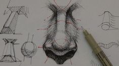 Pen & Ink Drawing Tutorials | How to draw a realistic nose