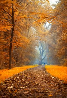 Autumn path - my interpatation of a man walking with his dog in forest in autumn.