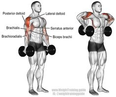 The dumbbell armpit row is a rare exercise that targets your lateral deltoid. Your posterior deltoid and various arm and back muscles act as synergists.