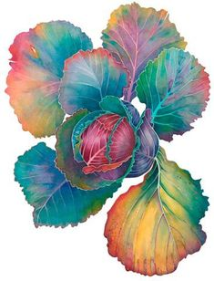 Cabbage watercolor - Jane Murray: