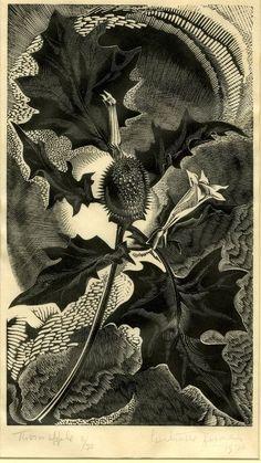 Gertrude Hermes, Thorn apple. 1930. Wood engraving. England. Powerful hallucinogen - Datura stramonium or Jimsonweed, nightshade family.