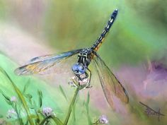 My latest dragonfly painting! Dragonfly Painting, Paintings, Animals, Animales, Paint, Animaux, Painting Art, Animal Memes, Painting