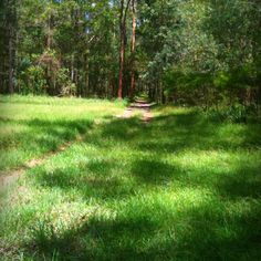 #photoadayMAY - day 14: grass {the green stuff that grows on the ground etc} taken @ Daisy Hill Forest.