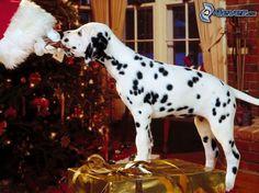 Puppy treat......