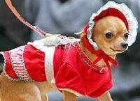 WEB LUXO - PETS: Novidades e informações para os bichos, cães, gatos, animais de estimação, petshops, eletrônicos, acessórios, tosas, roupas pára animais, hoteis para cachorros