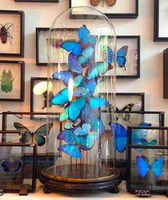 The Otherist Amsterdam: Cabinet of Curiosities   http://www.yourlittleblackbook.me/the-otherist-amsterdam/  retail concept store amsterdam interior butterfly