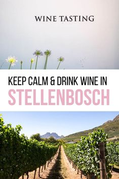 My favorite motto in life is 'keep calm drink wine'. I recommend my favorite Winelands vineyards for wine tasting in Stellenbosch, South Africa. Where to drink wine in the Winelands Food Tasting, Wine Tasting, Wine Tourism, Chenin Blanc, Keep Calm And Drink, In Season Produce, Winter House, Africa Travel, Wine Drinks