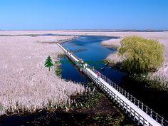 Point Pelee National Park, Windsor, ON
