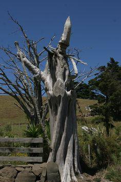 Wizard Tree - Enroute to Pakiri Beach North of Auckland.  #matakana #Pakiri