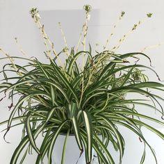 9 zimmerpflanzen welche die luft reinigen und fast - Indoor krautergarten ...