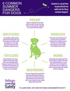 Be aware of these 6 common dangers. Share to keep dogs safe!