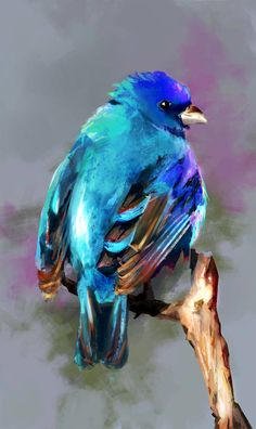 by Fievy on DeviantArt – Malerei Bird Painting Acrylic, Watercolor Bird, Watercolor Paintings, Beautiful Birds, Animals Beautiful, Bird Art, Blue Bird, Pet Birds, Painting Inspiration