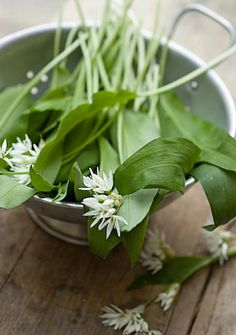 Google Image Result for http://www.laundryetc.co.uk/wp-content/uploads/2010/05/wild_garlic-4567.jpg
