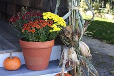 Mums the word for seasonal decor. Here I showcase red, orange and yellow in a terra cotta pot with some corn stalks.