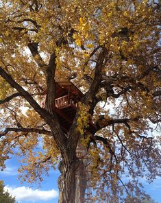 10 tree houses around the world you wish your parents built you