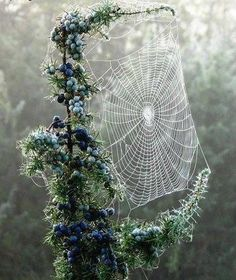 I love the juxtaposition of the beautiful flowers, so lovely against the image of the delicate, yet strong web. All creatures in nature are beautiful in some way.