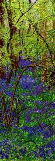 Bluebell Wood Embroidery 10 x 26cm Framed 24 x 40cm