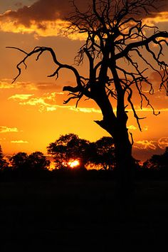 Africa safari vacation planners showcase some beautiful photographs of African sunsets. African Sunset, Africa Destinations, Call Of The Wild, Best Sunset, Kruger National Park, Picture Story, Africa Travel, Beautiful World, Beautiful Pictures