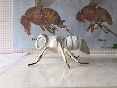 Struttura per drosophila megalonaster - Mock up per teca Sardegna nella sala potenza del limite -  Padiglione Italia Expo 2015 - Polistirolo e ferro  www.andreamanzoli.com