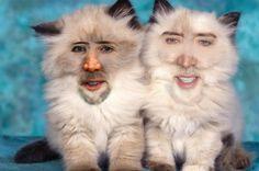 Nicholas Cage Cats