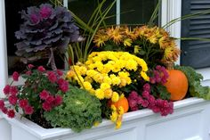 fall mums in window boxes | ... really inexpensive mums ($2.50 a piece?) at Lowes. Not a bad price