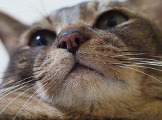 猫が飼えないワイのために愛猫自慢していけよ