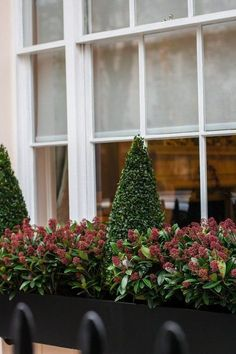 If you like your outdoor decor to be classic and elegant, but also unexpected, try this understated but lovely combo. Sheared boxwood cones (try Wee Willie) are surrounded by Japanese skimmia, a pretty, evergreen shrub (zones 7 -9) that flowers in early spring. You'll get the wintery contrast of leaves and cones now, with the promise of blooms to follow.
