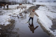 Montana's Spring Lambs - The farm grounds grow damp as spring arrives. Hazen Marshall walks in some fresh puddles. Credit: Rob Finch | © The Weather Channel