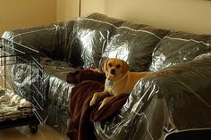 Plastic Sofa Covers are back for keeping your indoor and outdoor elegance Home Furniture, Furniture Design, Couch Covers, Comfortable Sofa, Pet Home, Sofa Design, Slipcovers, Indoor, Comfy
