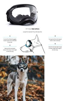 Sunglasses and Goggles 116376: Rex Specs Dog Goggles Large Black Frame 2 Clear Lens Uv400 Protective Eye Goggle -> BUY IT NOW ONLY: $79.95 on eBay!