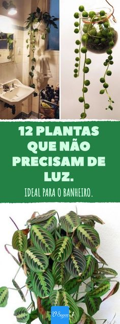 Ideal para el baño: 12 plantas que apenas necesitan luz. - 12 plantas que apenas necesitan luz. # plantas de interior La mejor imagen sobre home -