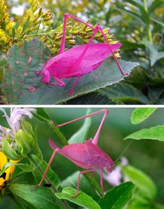 その色どうした?合成着色としか思えないほど予想外の色をした動物たち(昆虫含む)