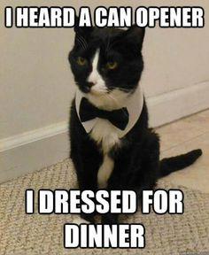 I heard a can opener | I dressed for dinner | formal cat | tuxedo
