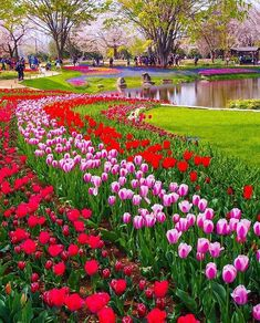 Image may contain: 1 person, flower, plant, outdoor and nature Wonderful Places, Beautiful Places, Instagram Images, Instagram Posts, Autumn Summer, Beautiful World, Tulips, Travel Photography, Earth