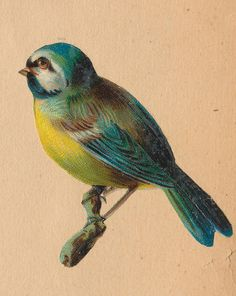vel n j | Flickr - Photo Sharing! vintage postcard with birds
