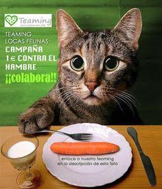 Muchos dueños de gatos parecen estar empeñados en que sus animales de compañía no pueden vivir dentro de casa, sino que necesitan sali...
