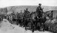 Horse drawn guns, WWI