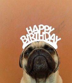 Yes, I celebrate my dog's birthday! http://pawsandprada.uk/yes-celebrate-dog-birthday-no-im-not-crazy/
