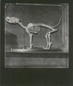 Photography, Animal skeleton
