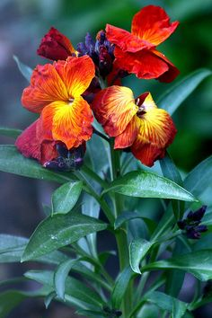Evil pursues sinners, But to the righteous, good shall be repaid.  [Proverbs 13:21] (Wallflowers)