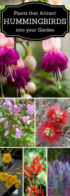 Love Hummingbirds, here are some plants that attract Hummers #LandscapePlants