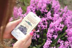 Suculentas Coloridas - Guia Digital - Um Amor Suculentas Natural, Flower Of May, Herb Garden, Colorful Succulents, Succulents Garden, Teaching Plants, Types Of Succulents, Hanging Succulents, Container Gardening