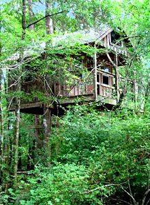 treehouse_300.jpg (220×300)