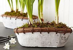 Funky Plant Pots