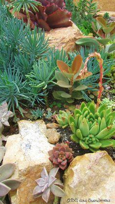 ABC das Suculentas: Jardim de suculentas