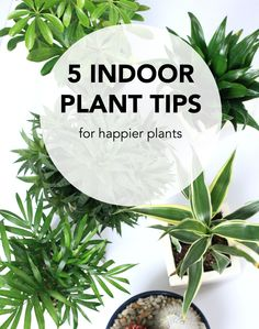 5 tips for indoor plants indoor plants and tips - Easy to take care of indoor plants ...