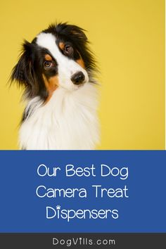 Leaving your dog alone at home can be stressful, but certain products exist to help ease these concerns.One of them is called a dog camera treat dispenser. Dog Treat Dispenser, Cute Dog Collars, Pet Camera, Diy Dog Toys, Dog Training Tips, Dog Accessories, Dog Owners, Dog Treats, Small Dogs